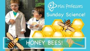 Sunday Science Honey Bees