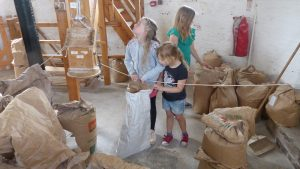 See how flour is made at Green's Windmill